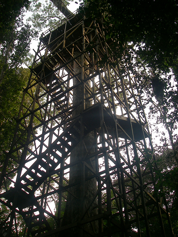 Observation tower in the jungle