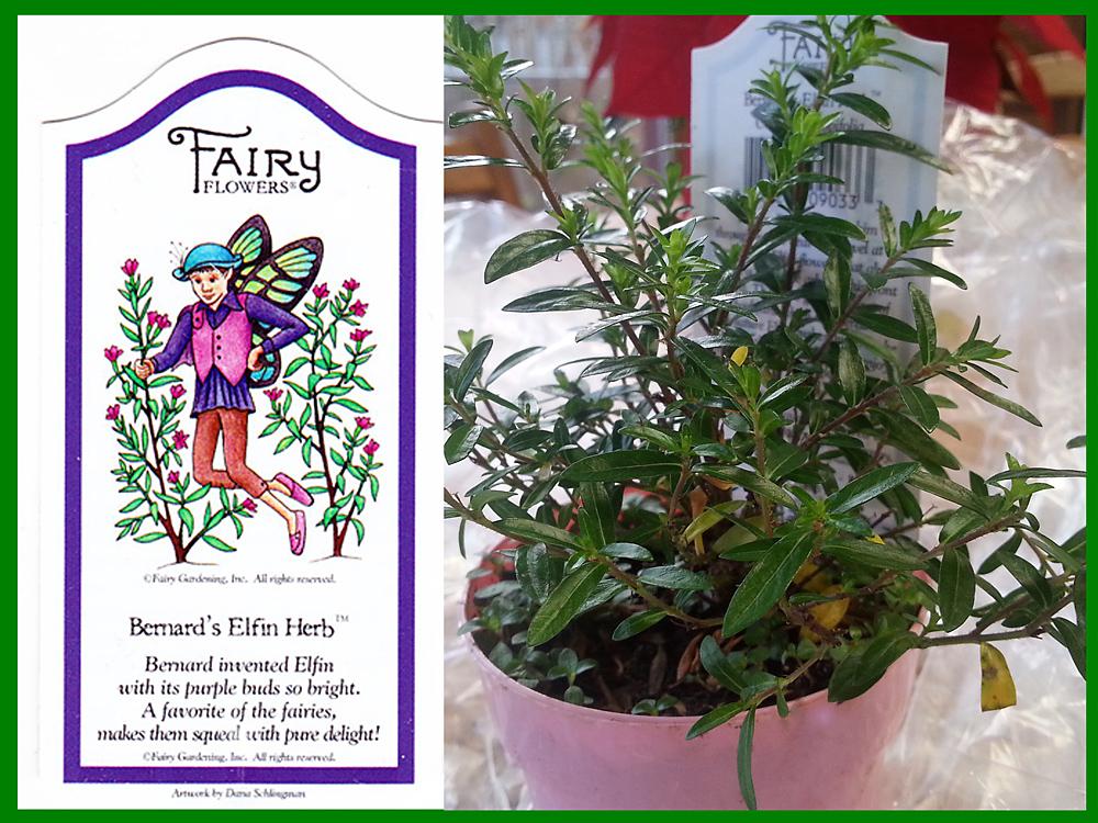 Bernard's Elfin Herb